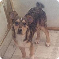 Adopt A Pet :: Snickers - Saskatoon, SK