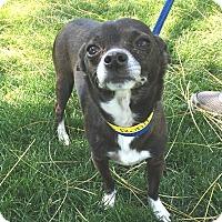 Adopt A Pet :: P.J. - Glendale, AZ