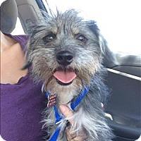 Adopt A Pet :: Dakota - Encino, CA