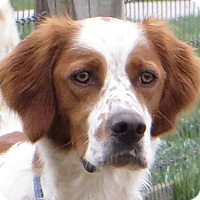 Adopt A Pet :: CHIEF - Pine Grove, PA