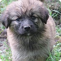 Adopt A Pet :: Peaches - Kyle, TX