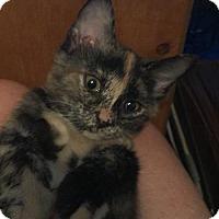 Adopt A Pet :: Pixie Dust - Hampton, VA