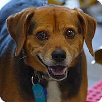 Adopt A Pet :: Sammy Caroline - Waldorf, MD