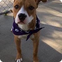 Adopt A Pet :: Sissy - Greensboro, NC