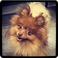 Adopt A Pet :: Hershey - Grand Bay, AL