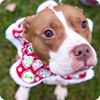 Adopt A Pet :: Kim - Villa Park, IL