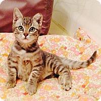 Adopt A Pet :: Little Rammy - Van Nuys, CA
