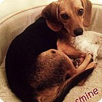 Adopt A Pet :: Jasmine - Glenpool, OK
