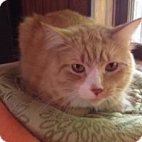 Adopt A Pet :: Chubbs - Byron Center, MI