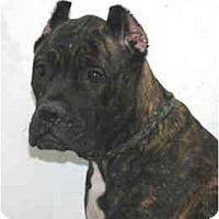 Adopt A Pet :: Daisy - Port Washington, NY