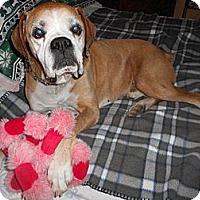 Adopt A Pet :: Frankie - Scottsdale, AZ