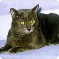 Adopt A Pet :: Nicky - Medway, MA