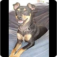 Adopt A Pet :: Izzy Wizzy - Phoenix, AZ