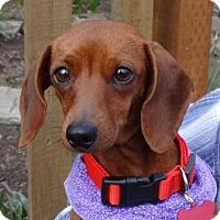 Adopt A Pet :: MAIZIE - Portland, OR