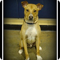 Adopt A Pet :: Jeter - Indian Trail, NC
