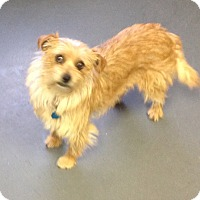 Adopt A Pet :: Zoey - Meridian, ID