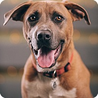 Adopt A Pet :: Steve - Portland, OR