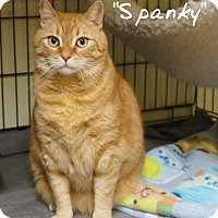 Adopt A Pet :: Spanky - Ocean City, NJ