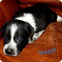 Adopt A Pet :: Maggie - Austin, TX