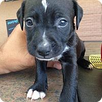 Adopt A Pet :: Puppies - Daleville, AL