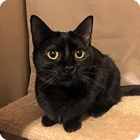 Adopt A Pet :: Lightning - Edmond, OK
