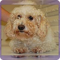 Adopt A Pet :: Pending!!KC - S TX - Tulsa, OK