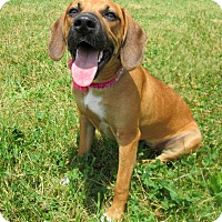 Adopt A Pet :: FALLON - New Manchester, WV