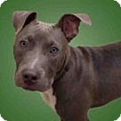 Adopt A Pet :: *ZORRO