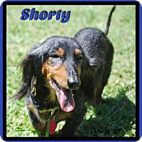 Adopt A Pet :: Shorty - Green Cove Springs, FL