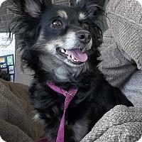 Adopt A Pet :: Tina Marie - Memphis, TN