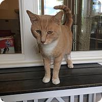 Adopt A Pet :: Crispin - Kingston, WA