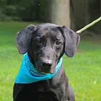 Adopt A Pet :: JT - Brattleboro, VT