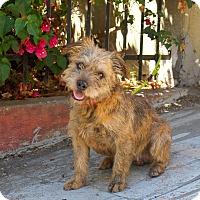 Adopt A Pet :: Pogo - Los Angeles, CA