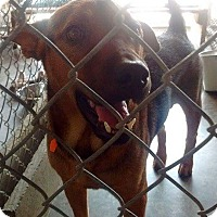 Adopt A Pet :: David - Livingston Parish, LA