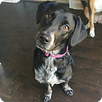 Adopt A Pet :: Rouge - Smithfield, NC