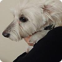 Adopt A Pet :: LITTLE DUDE - Dallas, TX