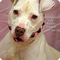 Adopt A Pet :: Milly - Newnan City, GA