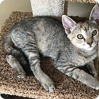 Adopt A Pet :: Lollipop - Bensalem, PA