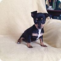Adopt A Pet :: Jasper - Shannon, GA