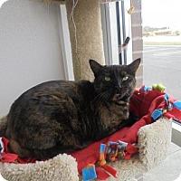 Adopt A Pet :: Emma-ADOPTION PENDING - Livonia, MI
