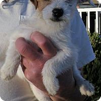 Adopt A Pet :: BABY GIRL - Corona, CA
