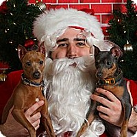 Adopt A Pet :: Boone & Bogey (Courtesy Post) - Malaga, NJ