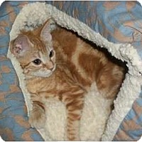 Adopt A Pet :: Pebbles - Modesto, CA