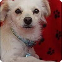 Adopt A Pet :: TESS - san diego, CA