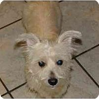 Adopt A Pet :: Rosalinda - Arlington, TX