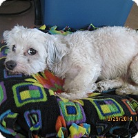 Adopt A Pet :: Babette - N. Fort Myers, FL