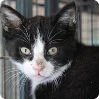 Adopt A Pet :: Scooby - Caistor Centre, ON
