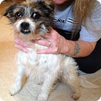 Adopt A Pet :: Oreo - Jasper, TN