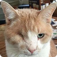 Adopt A Pet :: Buddy - Mattoon, IL