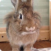 Adopt A Pet :: Rush - Watauga, TX